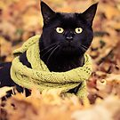 Black Cat in a Scarf by Ryan Conners