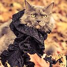 Dahlia Cat in a Scarf by Ryan Conners