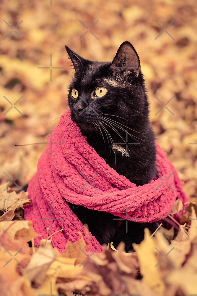 Black Cat in a Pink Scarf by Ryan Conners