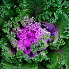 Cabbage??? © by Dawn Becker