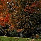 Fall in West Knoxville, Knoxville, Tennessee, USA by Bob Hall©