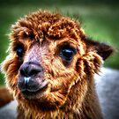 Alpaca by Kim Slater