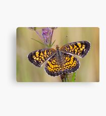 Pearl Crescent Butterfly on Wildflowers Canvas Print