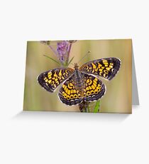 Pearl Crescent Butterfly on Wildflowers Greeting Card