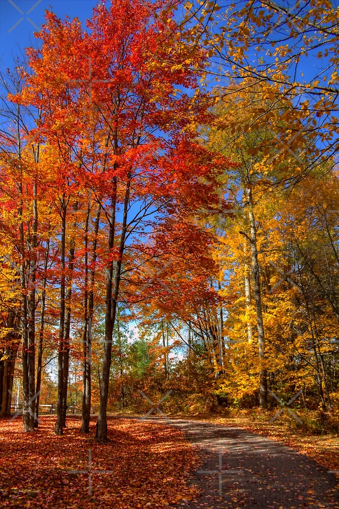 Beautiful Autumn Day by Megan Noble