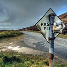 Rabbit in the Road by JPassmore