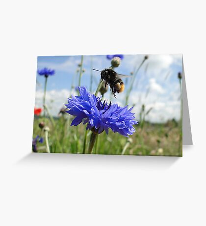 Flight Bee Incoming Greeting Card