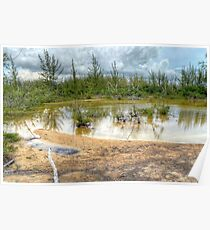 Scenery behind the beaches in Coral Harbour, The Bahamas Poster