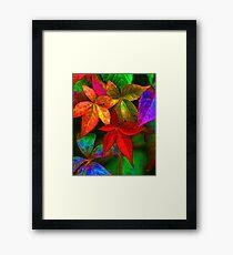 Multi coloured leaves Framed Print