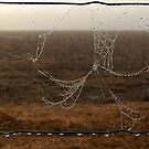 Cobweb on Fence by Eve Parry