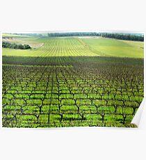 Ferngrove Vineyard # 2 Poster