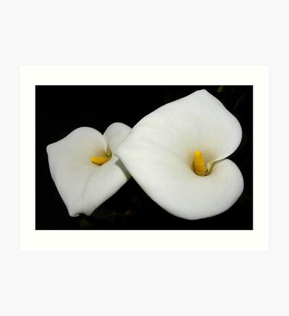 classic calla lilies Art Print