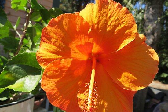 Sunshine On My Petals by AuntDot