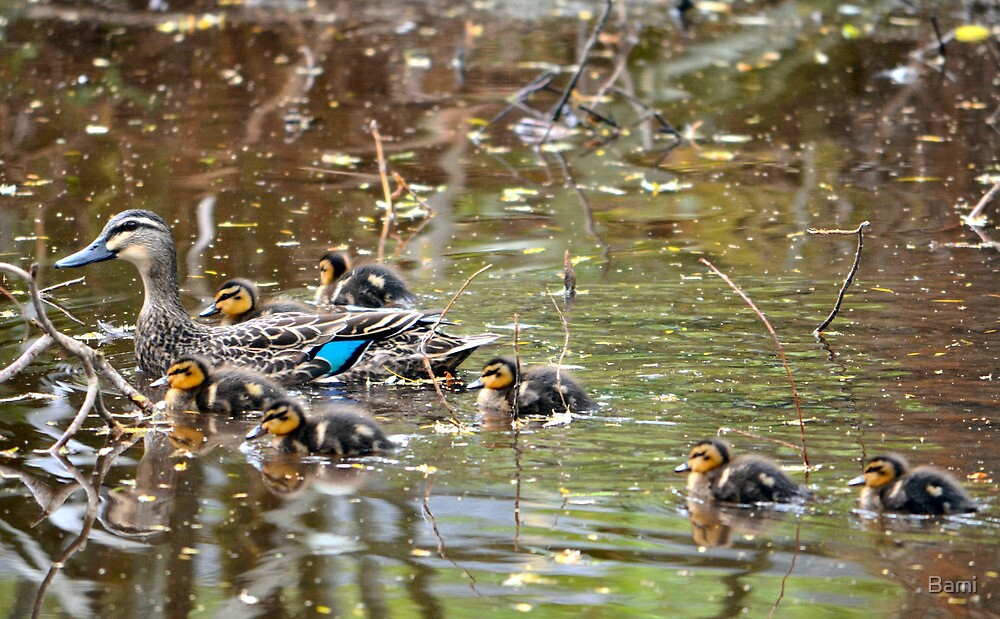 Duck Family by Bami