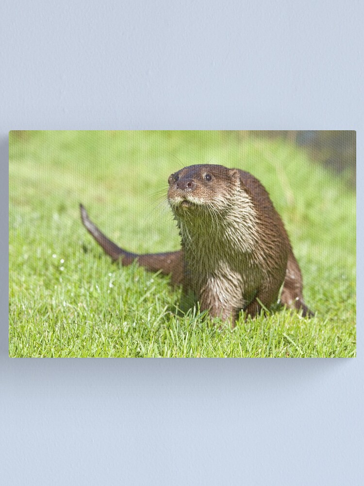 Alternate view of Curious otter Canvas Print