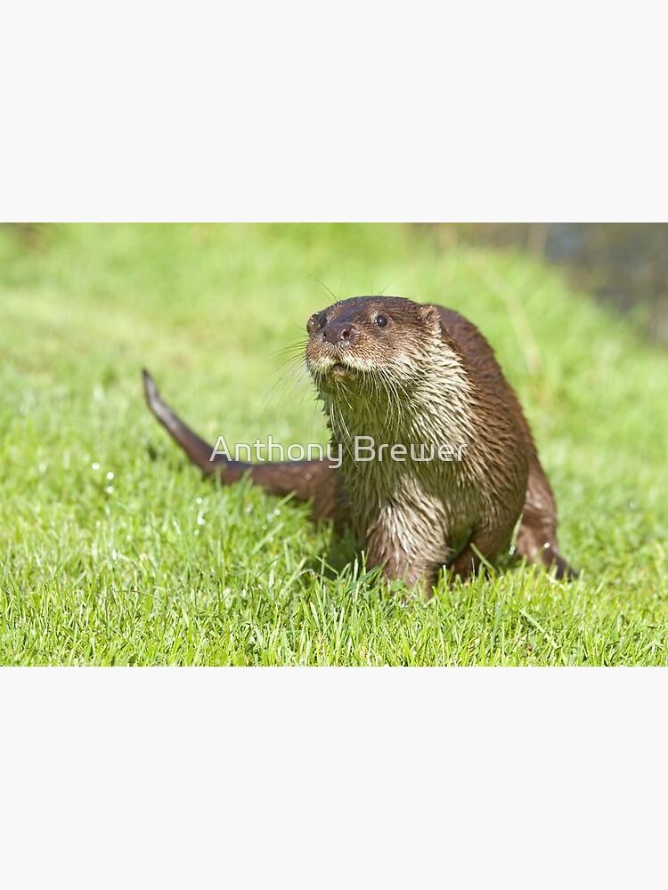 Curious otter by dailyanimals