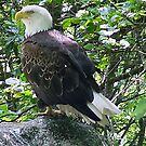 majestic! by Penny Fawver