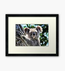 Blinky Bill Framed Print