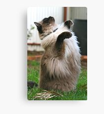 Harry reaching for the sky Canvas Print