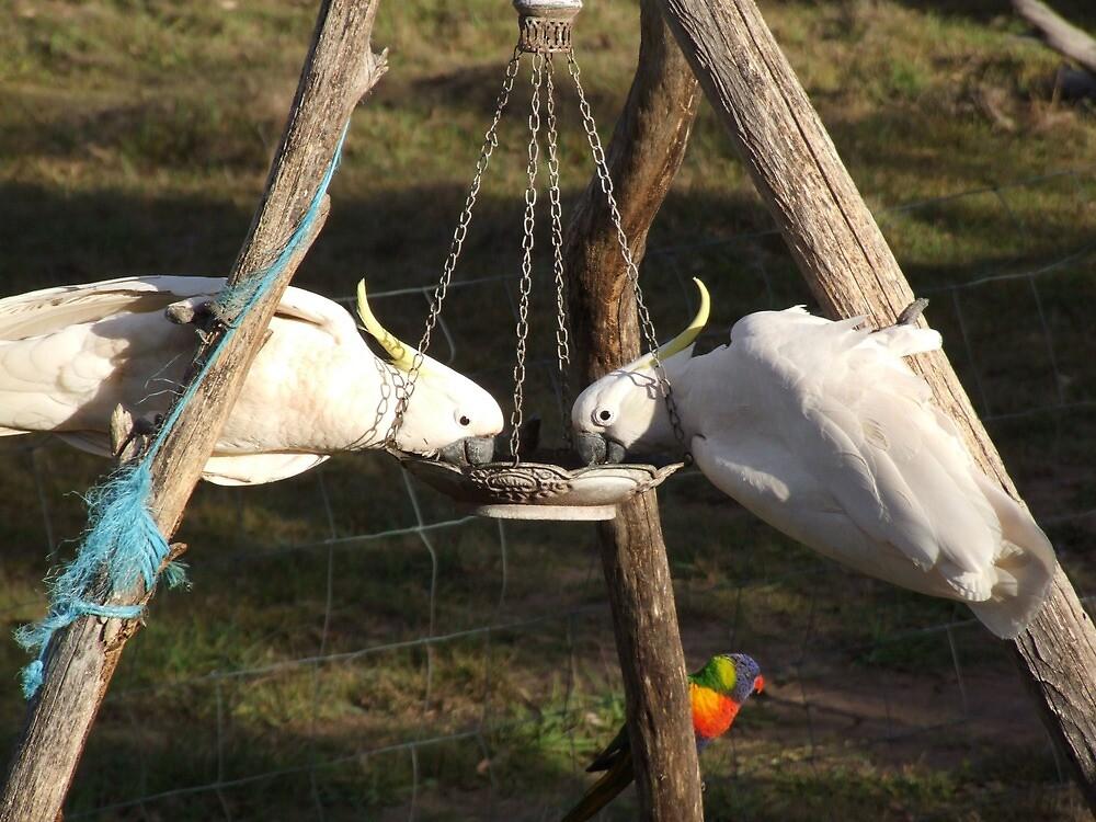 """It's a """"Finch Feeder"""" guys, ok, a 'finch' feeder!! by Mark Batten-O'Donohoe"""