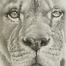 Up Close Lion by BarbBarcikKeith