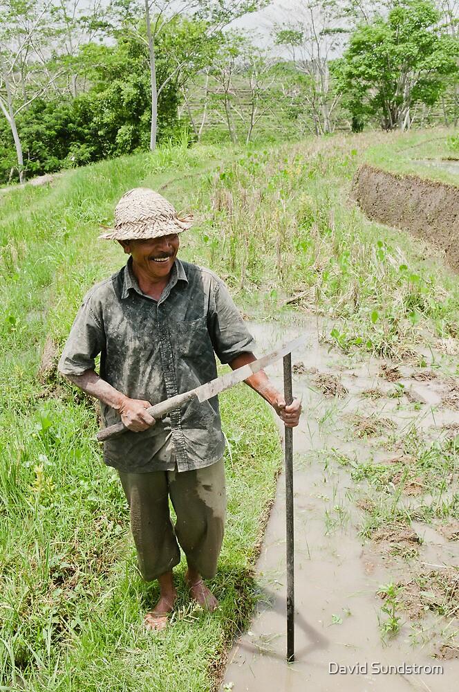 Rice Farmer by David Sundstrom