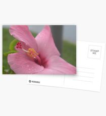 Pink Hibiscus Postcards
