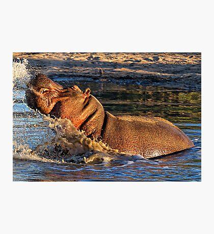 VERY Unhappy Hippo Photographic Print