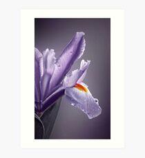 """Elegant Iris............."" Art Print"