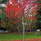 Red Tree by martin bullimore