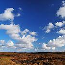 in between peatland & deep sky by NordicBlackbird