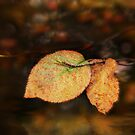 Autumn Reflections by Ticker