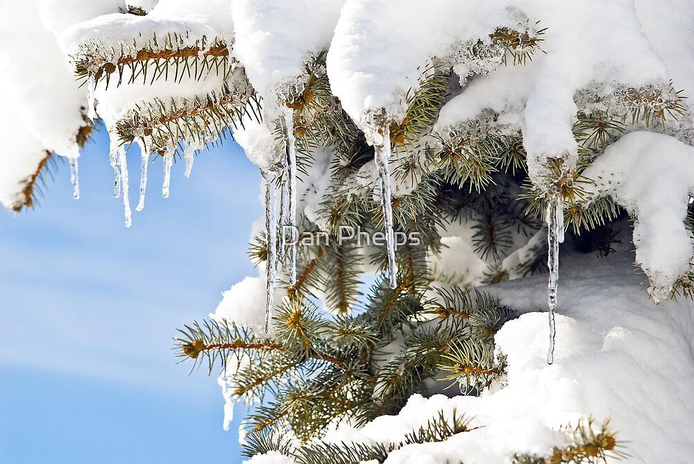 Winter Tree by Dan Phelps