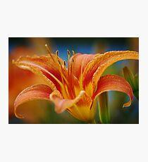 Flower II Photographic Print