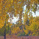 Autumn Picnic Spot by Bo Insogna