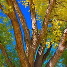 Beautiful Blue Sky Autumn Day by Bo Insogna