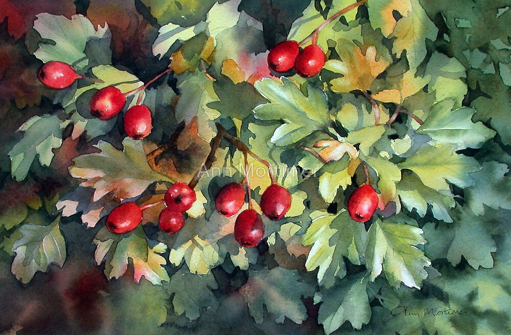 Hawthorn catching the sun by Ann Mortimer
