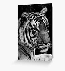 Tiger head shot B&W Greeting Card