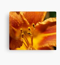 Orange flower petals macro Canvas Print