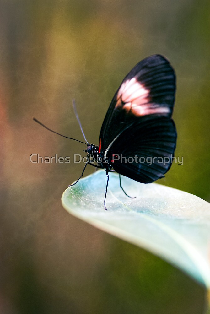 ACROPHOBIA by Charles Dobbs Photography