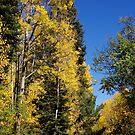 Autumn at McKnight by Vicki Pelham
