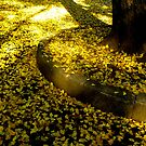 The shades of autumn  by Tamara Travers