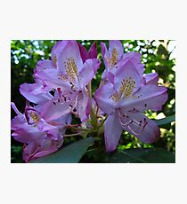 Spring zeal Photographic Print