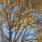 Autumn Again... by Christopher Clark