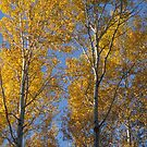 More Autumn Leaves... by Christopher Clark