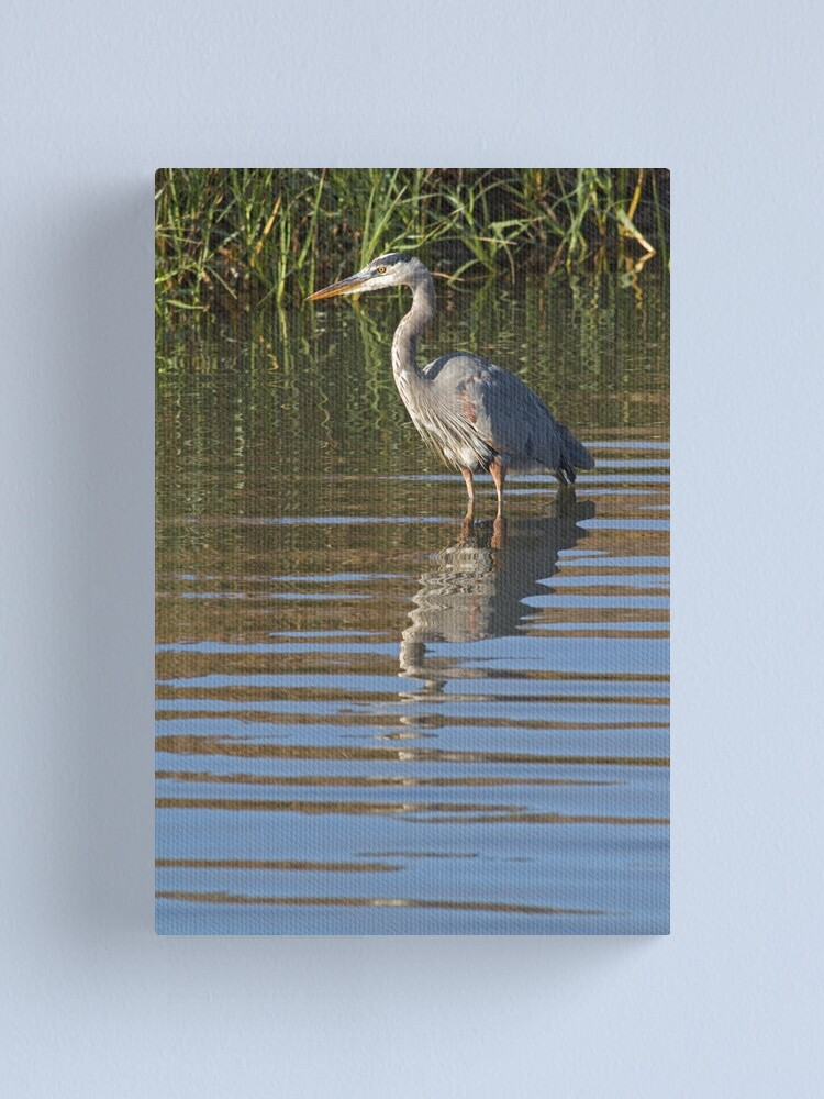 Alternate view of Heron portrait Canvas Print