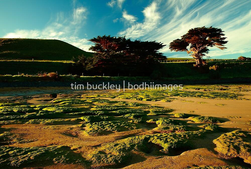 godfreys beach, stanley. northwest tasmania by tim buckley | bodhiimages