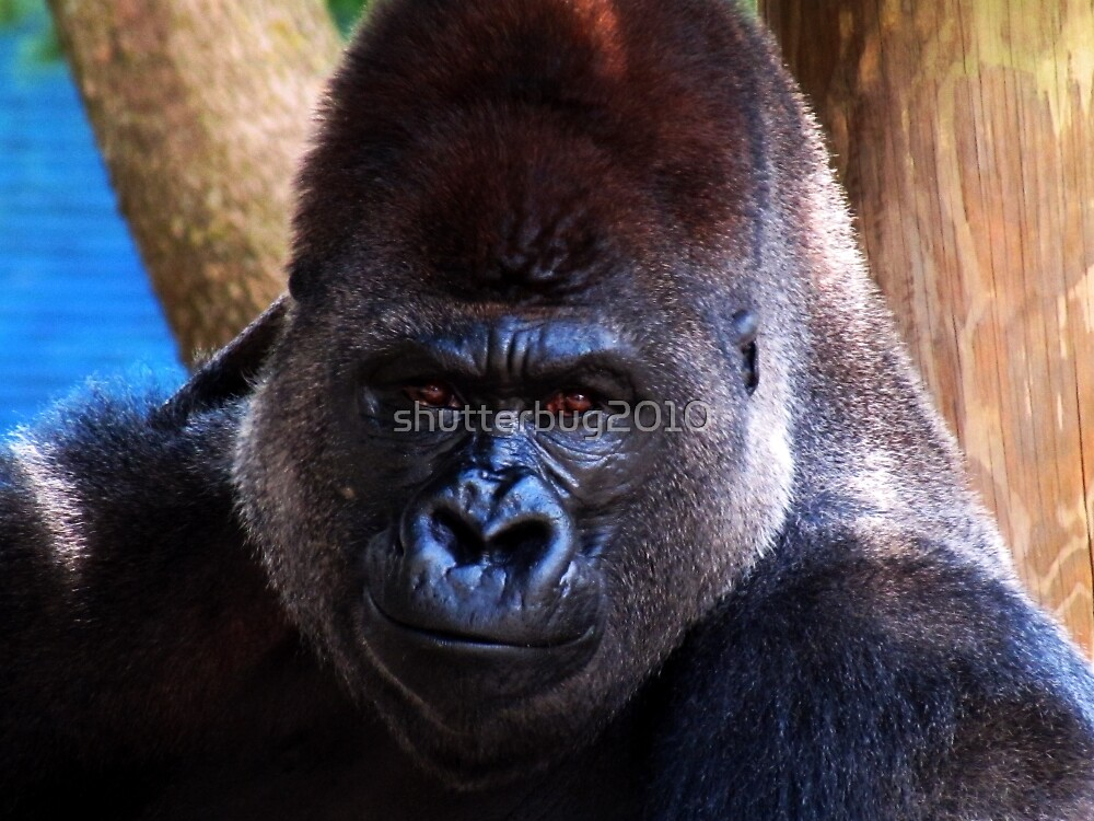 Tall, Dark, and Handsome by shutterbug2010
