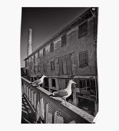 The Birds of Alcatraz Poster