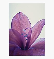 Purple Flower - Macro Photographic Print